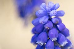 Bunch (DiscoloredBlueSummers) Tags: macro bunch nature flower sony ilce7 fe90mmf28macrogoss sel90m28g