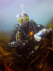 18 July 2016 - Scillies Trip PICT0215 (severnsidesubaqua) Tags: scillies scilly scuba diving