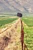 0Z4A8256-Edit (francois f swanepoel) Tags: forcedperspective landscape landskappe porterville weskaap westerncape rust lonesometree