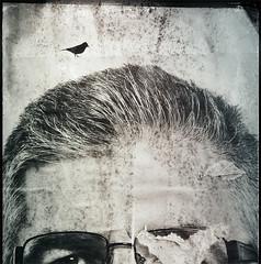 (ojoblanco) Tags: lisboa lisbon portugal torn political poster decollage bird