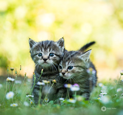 Miaou (L'agriculteur Illumin) Tags: dylan koller canon eos 5d mark iii cats chat chatons animaux 100mm macro