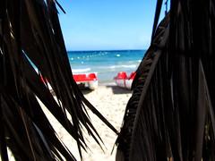 IMG_1428 (dorcolka011) Tags: grcka greece palms palme sea more seaside leto summer