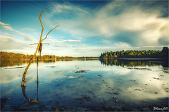 Totem object (PascaLucasJy) Tags: nature boismort eau water rivire reflection reflet paysage landscape lumire lodet bretagne breizh nikon