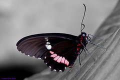 K46A8192-2 (Yvonne23021984) Tags: schmetterling butterfly hamm germany deutschland maxipark markro photography macrophotography canon canonphotography markofotografy canoneos7dmarkii insects insekten nature naturfotografie naturephotography closeup colorkey schmetterlinge butterflies