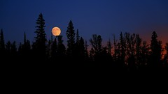 Rest on the treetops (y_egan) Tags: moon lostlake colorado evening trees silhouette yoshikoegan canoneos