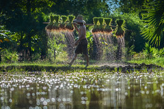 Farmer Countryside of Thailand (noomplayboy) Tags: country thailand thai paddy boke green reflection mountain asia water plant landscape life lake people udonthaniprovince travel dropwater