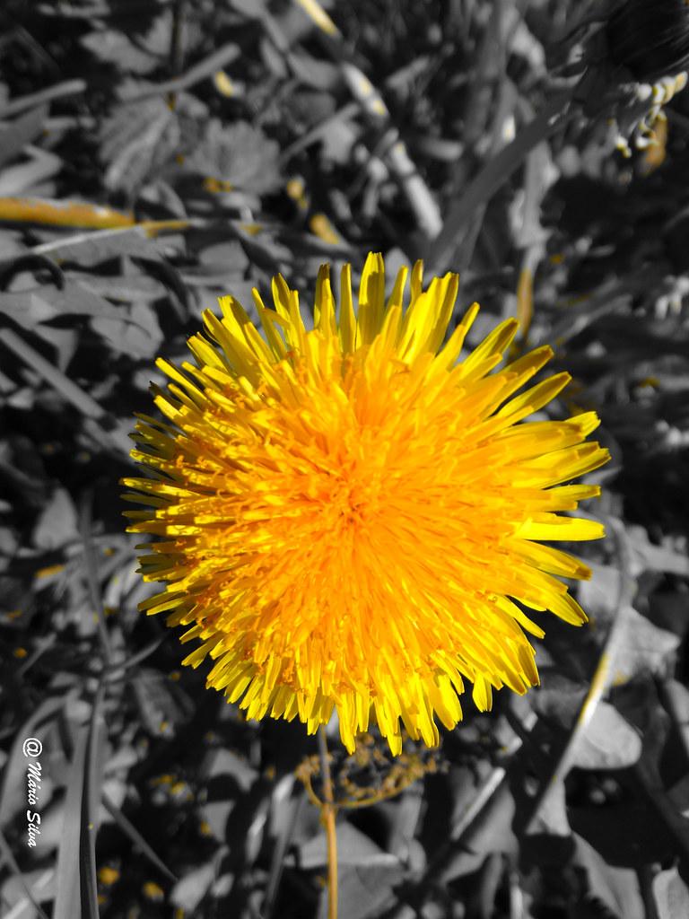 Águas Frias (Chaves) - ... simplesmente ... uma flor ...