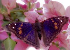 Borboleta (Toni CT Lima) Tags: flores butterfly morte vida borboleta