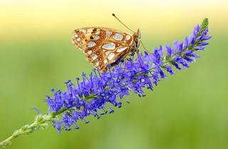 Goodbye butterfly...