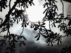 Shades of grey by day (Impazzire_) Tags: sun black leaves sunshine grey day tag grau basel sonne blätter schwarz sonnenschein