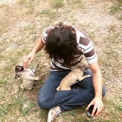 Das perros (Mar Martha May Marlene) Tags: chihuahua pug doggies dogdayafternoon perricos