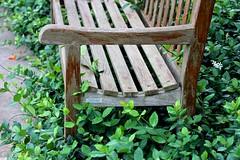 Overgrowth:  Happy Bench Monday!!! (LarryJay99 ) Tags: sunlight texture bench outside vines angle florida seat westpalmbeach foliage greenery overgrowth canonefs60mmf28macrousm mountsbotanicalgardens happybenchmondayilobsterit canonefs60mmf28macrousa