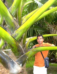 ~Oct 2009 Fairchild Gardens #12~ (endemanf) Tags: miamiflorida fairchildbotanicalgardens tropicallandscapes tropicaljunglegardens