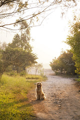 Sissi (Tc photography. Per) Tags: morning trees orange dog pet sun green nature beauty grass goldenretriever way landscape retriever breakingdawn tcphotography
