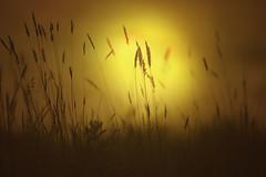 sunrise (irina_escoffery) Tags: