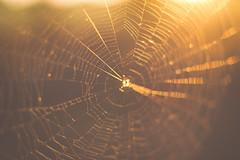 Spidey Sunset (Larry April) Tags: sunset golden spider nikon web goldenhour notmacro nikonian d3200