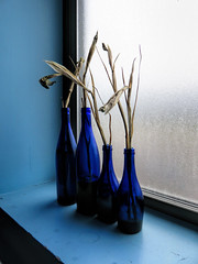 Blue bottles sitting in a windowsill. (dckellyphoto) Tags: pittsburgh pittsburghpa pittsburghpennsylvania alleghenycounty pennsylvania blue bluebottles frosted glass windowsill sill window societyforcontemporarycraft