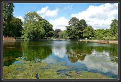 Carshalton Ponds.. (Tadie88) Tags: nikond7000 nikon18200lens carshaltonponds surrey water river riverwandle