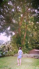Hermoso rbol, races fuertes (Mayan_princess) Tags: chiapas argovia finca resort caf coffee kaffee paraso paradise vegetacin vegetation verde green ro river spa relajacin relax forest selva orgnico autosostenible