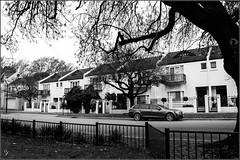 'In the street where I don't live' (wallygawr) Tags: 69thbirthday bevereley bradley coco dogpark family highgaate joanne nachoperro people pets robbie shiro sueiki dogs