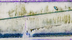 Lonely bird lonely human (Bamboo Barnes - Artist.Com) Tags: japan light shadow photo painting blue green black digitalart bamboobarnes landscape concrete wall river bird grey white slope