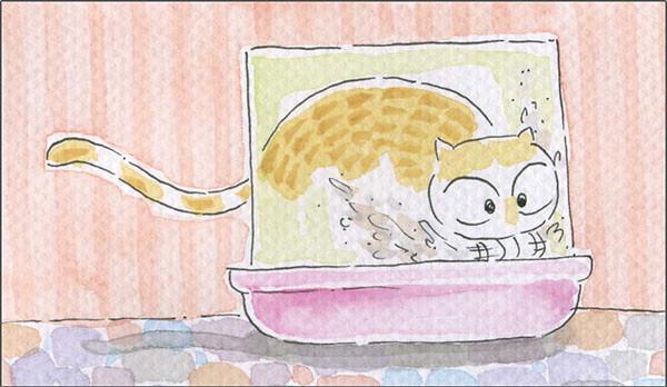 家裡來了一隻貓 裝備升級 Part 2