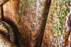 MacroTexture - rust (explored) #FlickrPhotowalk (Nick.Ramsey) Tags: macro texture rust gate lock photowalk flickrphotowalk macrotextures macromondays nickramsey canonef100mmf28lmacro eos7dmarkii