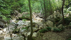Gole del Salinello - in forest (GlobalQuiz.org) Tags: gole del salinello mountains trekking