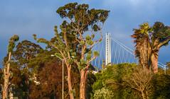 don't look back (pbo31) Tags: sanfrancisco california nikon d810 color july 2016 summer boury pbo31 overcast treasureisland baybridge 80 bridge easternspan trees green sunset