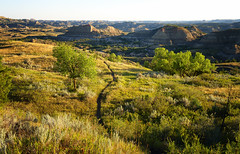 The Hiking Trail Beckons-Web (hunter20ga) Tags: nationalparks hikingnationalparks theodorerooseveltnationalpark tnrp teddyrooseveltnationalpark northerngreatplains greatplains badlands prairie hikingtrail morninglight earlylight