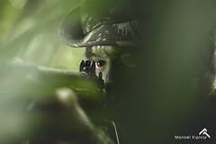 GUERRA NA SELVA (Manoel kipissy) Tags: artilharia forasarmadas selva militar extremonorte 10gacsl exrcitobrasileiro soldado exrcito cbfilho infantaria amazniaocidental roraima braoforte fotografomilitar fronteira campo operao kipissy guerranaselva exercitooficial cma maoamiga