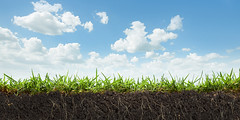 503039699 (mlowver) Tags: backgrounds clearsky cloud crosssection dirt environmentalconservation grass green lawn nature sky textured turf underground