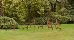 Savill Garden 27 September 2016 019 (paul_appleyard) Tags: savill garden september 2016 simon hempsell herd deer