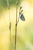Flamboyant (photosenvrac) Tags: macro papillon bokeh couleur insecte borsdeloire thierryduchamp sigma150