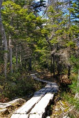DSC01522-01 (alexrupp426) Tags: outdoor landscape plant tree path trail bar harbor acadia national park