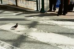 Crossing crosses. Edinburgh 05.2015 #film #nikon #f55 #50mm #streetphotography #crossing #traveling #uk #scotland #edinburgh #bird (man.cheukhim) Tags: uploaded:by=instagram film nikon f55 50mm streetphotography crossing traveling uk scotland edinburgh bird