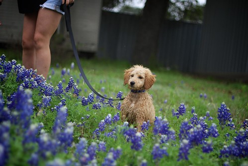 "Easter 2015 Bluebonnet Adventure • <a style=""font-size:0.8em;"" href=""http://www.flickr.com/photos/20810644@N05/16863483330/"" target=""_blank"">View on Flickr</a>"