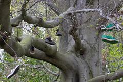 shoe tree (Karen Burgoyne) Tags: tree canon shoe scotland shoes aberdeen hanging northeast shoetree seatonpark 600d