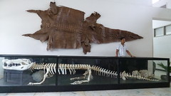 Rio, the 17-ft, 67-yo crocodile (sofimi) Tags: travel leather skeleton skin puertoprincesa palawan crocodilefarm palawanwildliferescueandconservationcenter riothecrocodile