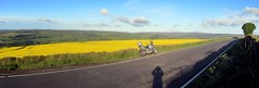 Gota road.? Gotta ride!! (Mike-Lee) Tags: road shadow autostitch mike bike yellow stitch pano sheffield earlymorning motorbike rapeseed onmywayhomefromwork june2015 cagivanavigator1000
