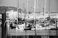 Life in the harbor (Mario Ottaviani Photography) Tags: life sea blackandwhite bw white black bird monochrome grey monocromo harbor boat ship seagull sony gray row bn tamron bianco nero biancoenero sonyalpha