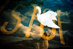 kill two birds with one stone (lomomowlem) Tags: swan lomo lca xpro lomography xprocess crossprocess seagull lofi multipleexposure stop analogue tripleexposure expiredfilm kodakelitechrome ebx colourstreambrighton