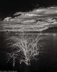 Nisqually Delta (mjardeen) Tags: blackandwhite bw white black tree water clouds ir dead conversion sony tide 28mm delta infrared converted fe nisqually on1 282 2 lifepixel on1effects 702nm billyfrankjrwildliferefuge sonyfe28mm2
