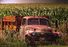 Chevy Cornhusker     ....HFF! (jackalope22) Tags: truck corn iowa chevy husker htt