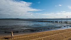Waterscape at Long Jetty (Merrillie) Tags: natural nikon nature australia d5500 nswcentralcoast newsouthwales nsw centralcoastnsw landscape wharf photography dog outdoors waterscape water centralcoast longjetty outdoor tuggerahlake lake