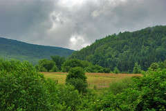 Clearing flowering meadow (Hejma (+/- 4500 faves and 1,5milion views)) Tags: bieszczady national park polish landscape darkclouds fog tree forest meadows wildflowers grazing hills