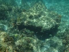 魚の群れ (lulun & kame) Tags: アメリカ大陸 snorkeling scottshead america dominica シュノーケリング スコッツヘッド ドミニカ