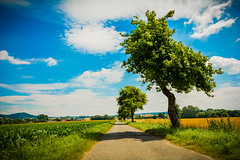 Saturated Road (photojaker00) Tags: d5200 nikon photography picoftheday jaker photo dslr awesome lightroom adobe photoshop outdoor einfarbig feld landschaft meer himmel heiter wasser wehat field endless sky stars night light road forest sun shining butterfly flower