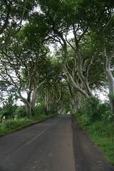 DSC05120 (raehyunie) Tags: dark hedges ireland