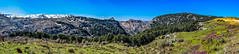 Tannounire Cedar Forest, Lebanon (Paul Saad) Tags: panoramic pano panorama hdr cedars forest sky mountain mountains mountainside tannourine hadatheljebbe landscape landscapes lebanon nature nikon cedartree